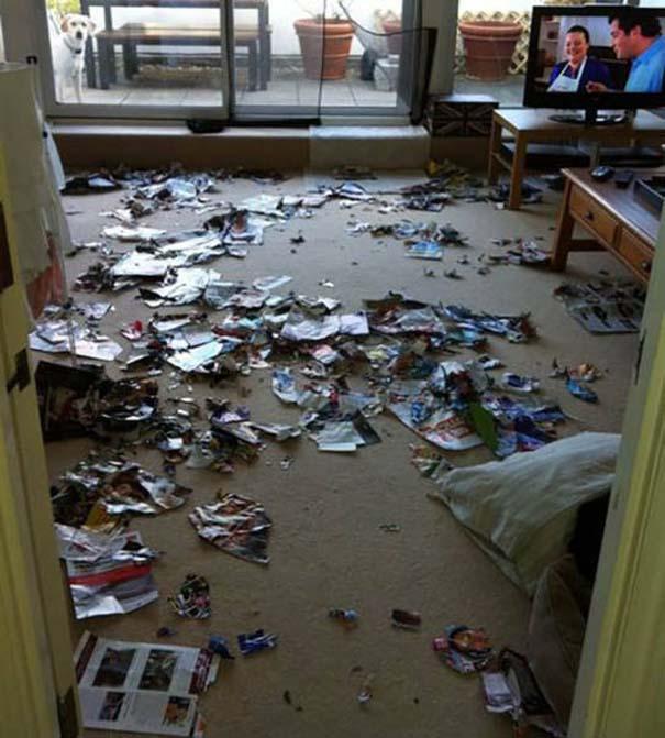 Κατοικίδια που μεταμορφώθηκαν σε καταστροφέα μόλις έμειναν για λίγο μόνα στο σπίτι (22)
