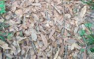 Μπορείτε να εντοπίσετε το φίδι πού κρύβεται ανάμεσα στα πεσμένα φύλλα; (3)