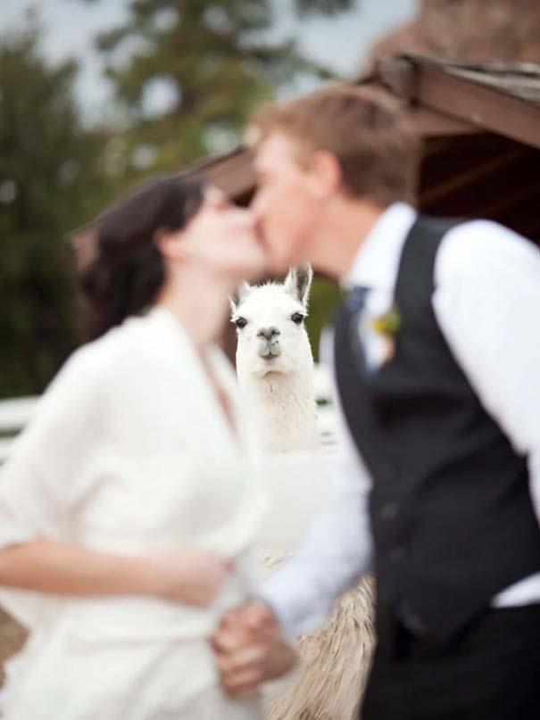 Νεόνυμφοι που αποφάσισαν να πρωτοτυπήσουν με τις γαμήλιες φωτογραφίες τους (10)