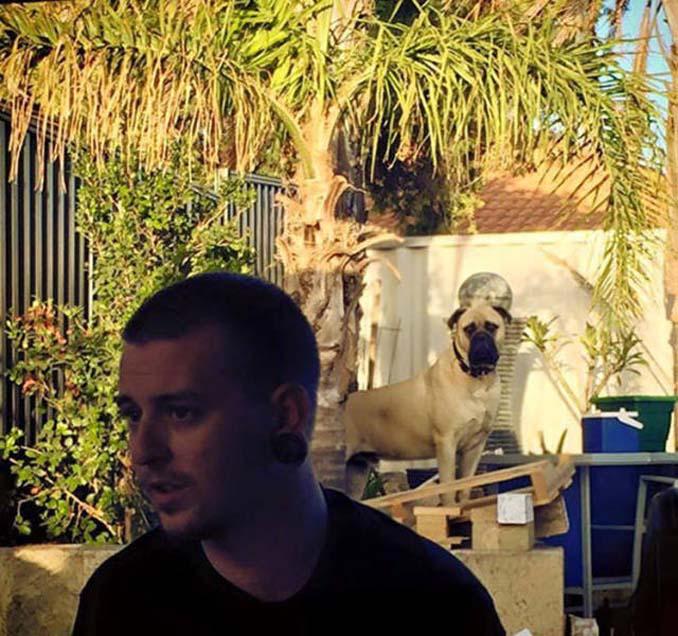 Όταν ο σκύλος σου δεν μπορεί να πάρει τα μάτια του από πάνω σου (6)