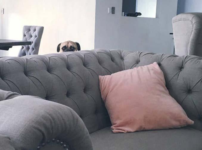 Όταν ο σκύλος σου δεν μπορεί να πάρει τα μάτια του από πάνω σου (7)