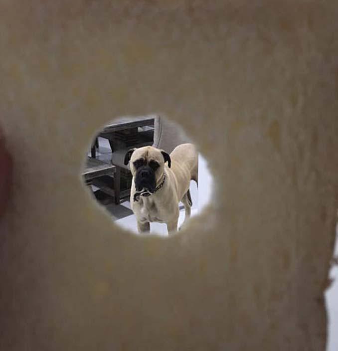 Όταν ο σκύλος σου δεν μπορεί να πάρει τα μάτια του από πάνω σου (11)