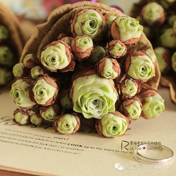 Παχύφυτα που θυμίζουν τριαντάφυλλα (16)
