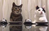 Απλά δυο πεινασμένες γάτες που χτυπάνε το κουδούνι για να ζητήσουν φαγητό...