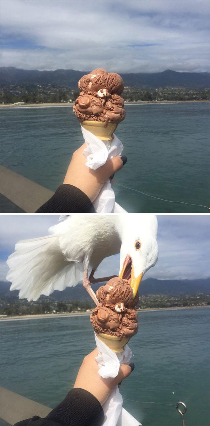 Όταν προσπαθείς να βγάλεις την τέλεια φωτογραφία παγωτού και ξαφνικά... | Φωτογραφία της ημέρας