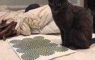 Δείτε πώς αντιδρά αυτή η γάτα σε μια οφθαλμαπάτη