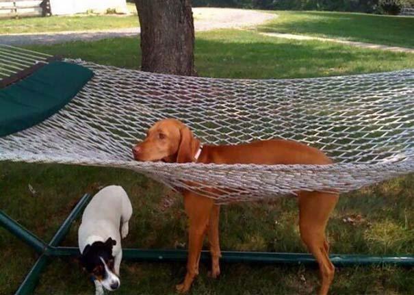 Σκύλοι που έχουν περάσει και καλύτερες στιγμές (1)