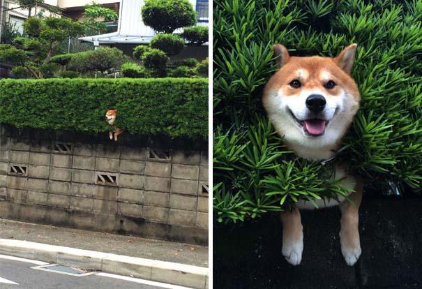 Σκύλοι που έχουν περάσει και καλύτερες στιγμές (2)