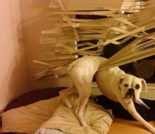 Σκύλοι που έχουν περάσει και καλύτερες στιγμές (9)
