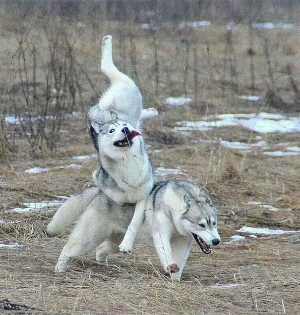 Σκύλοι που έχουν περάσει και καλύτερες στιγμές (10)