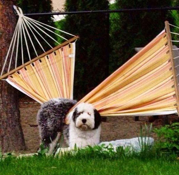 Σκύλοι που έχουν περάσει και καλύτερες στιγμές (11)