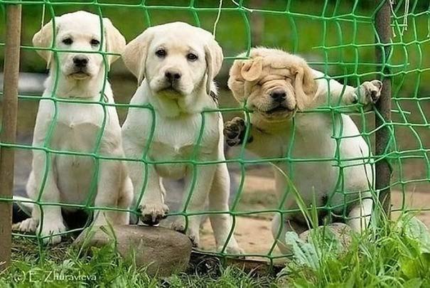 Σκύλοι που έχουν περάσει και καλύτερες στιγμές (12)