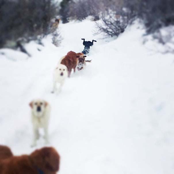 Σκύλοι που έχουν περάσει και καλύτερες στιγμές (14)
