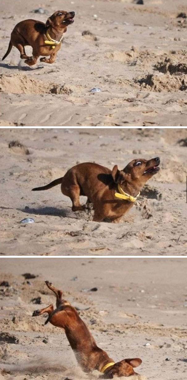 Σκύλοι που έχουν περάσει και καλύτερες στιγμές (15)