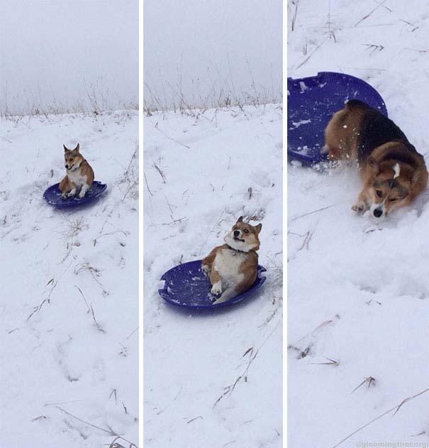 Σκύλοι που έχουν περάσει και καλύτερες στιγμές (16)