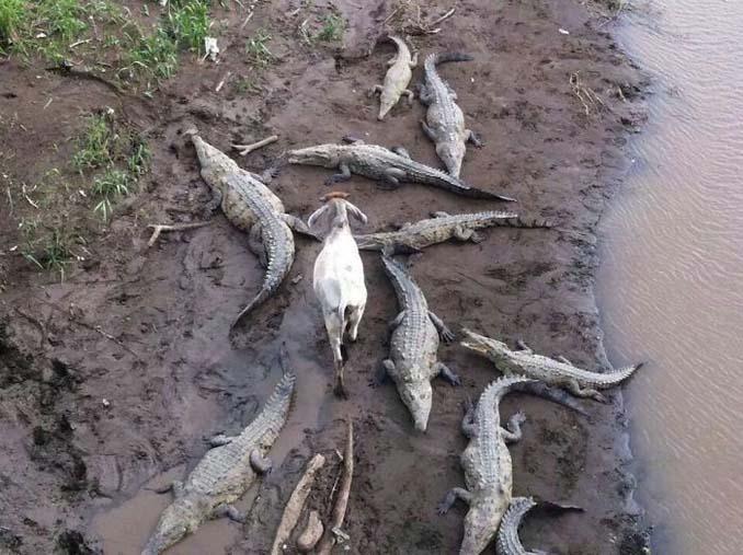 Ζώα που απλά δεν τα νοιάζει τίποτα (10)