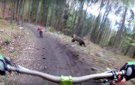 Η τρομακτική στιγμή που μια αρκούδα αρχίζει να κυνηγάει ποδηλάτες