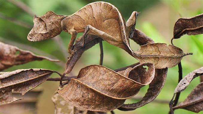 Εκπληκτικά παραδείγματα ζώων που είναι μετρ στο καμουφλάζ (12)