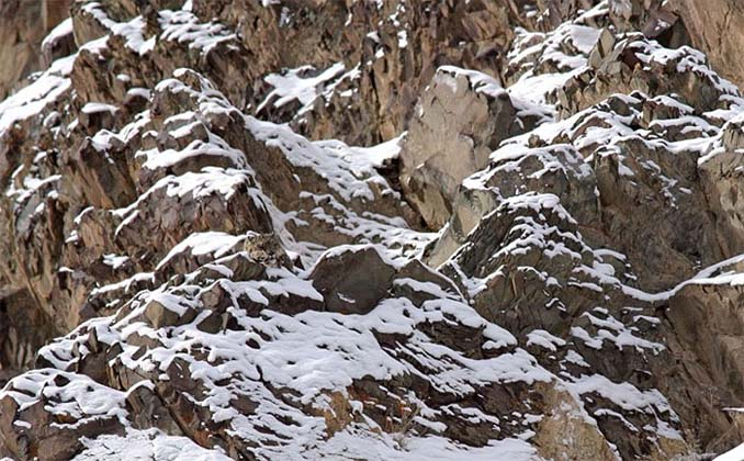 Εκπληκτικά παραδείγματα ζώων που είναι μετρ στο καμουφλάζ (14)