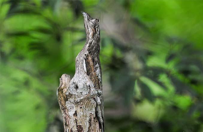 Εκπληκτικά παραδείγματα ζώων που είναι μετρ στο καμουφλάζ (27)