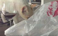 Γάτα μετανιώνει αμέσως την συνάντηση της με μια πλαστική σακούλα
