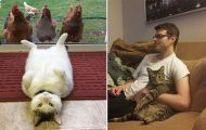 Γάτες που... κάνουν τα δικά τους! #49 (11)