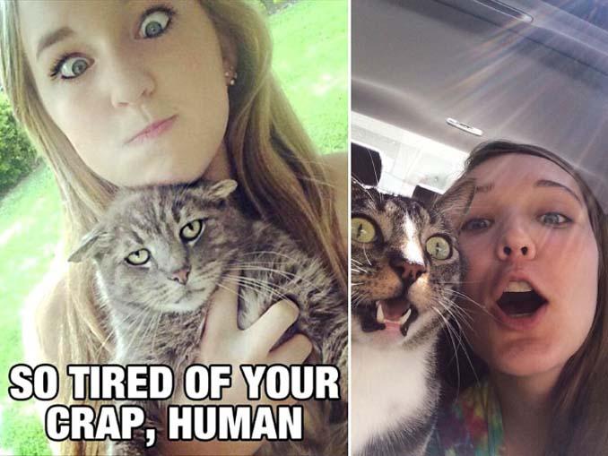 Αυτές οι γάτες σιχαίνονται τις selfies (8)