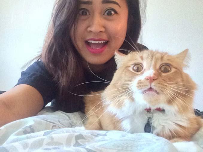 Αυτές οι γάτες σιχαίνονται τις selfies (9)