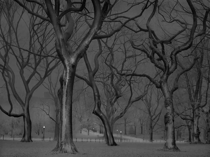 Μόνος στο Σέντραλ Παρκ (7)