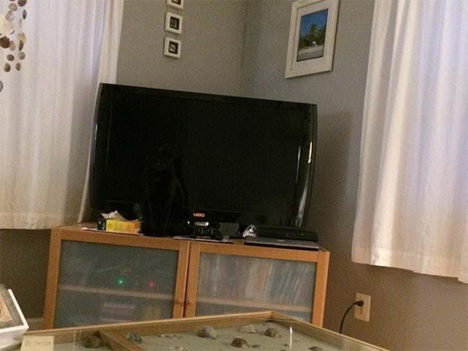 Μπορείτε να εντοπίσετε τις γάτες σε αυτές τις φωτογραφίες; (5)