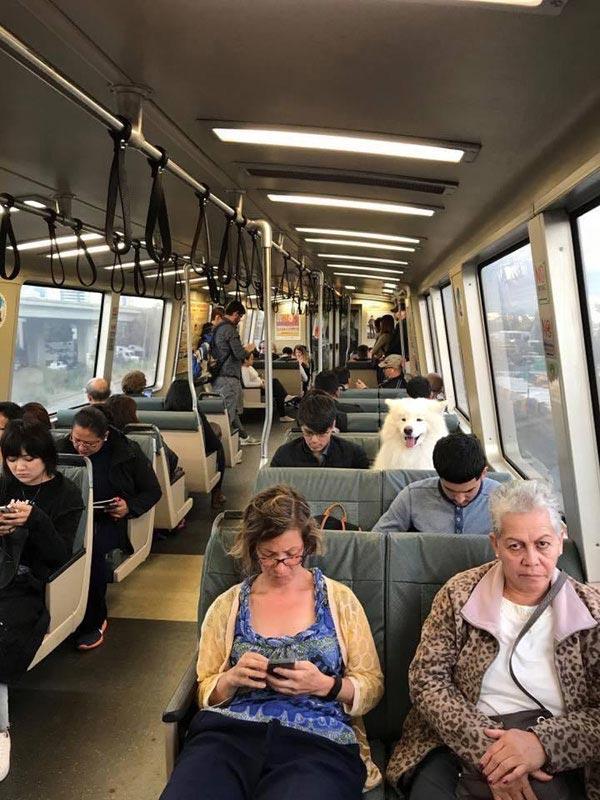 Ένας ασυνήθιστος επιβάτης στο τρένο   Φωτογραφία της ημέρας