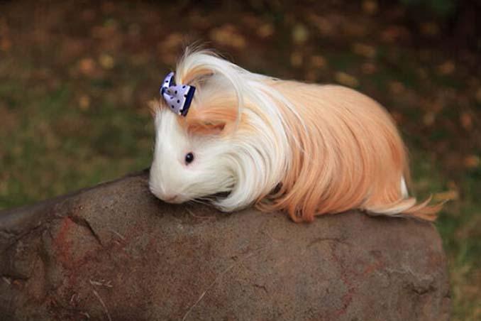 Το πλάσμα με το πιο εντυπωσιακό μαλλί στο ζωικό βασίλειο (4)