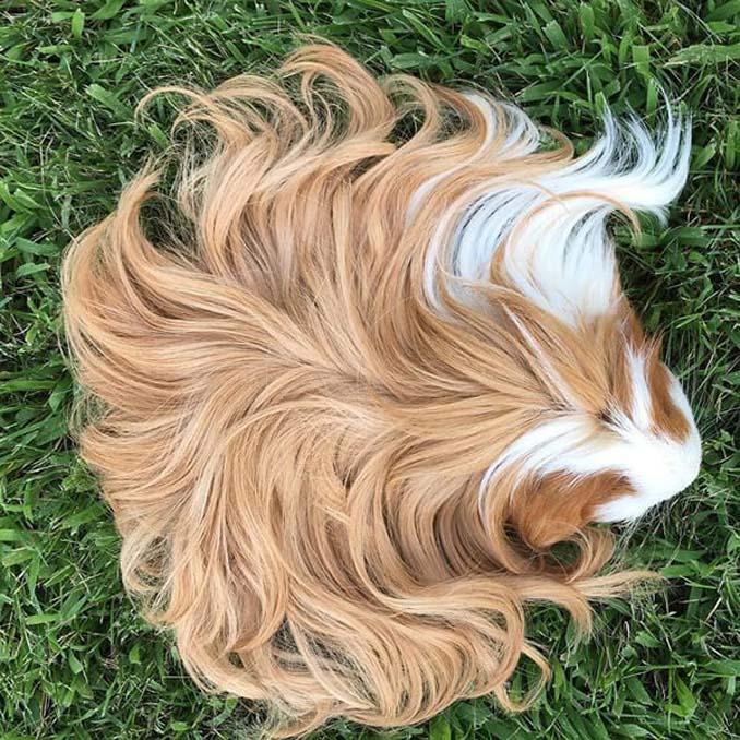 Το πλάσμα με το πιο εντυπωσιακό μαλλί στο ζωικό βασίλειο (10)