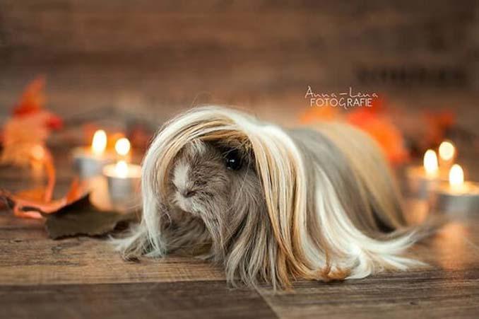 Το πλάσμα με το πιο εντυπωσιακό μαλλί στο ζωικό βασίλειο (11)