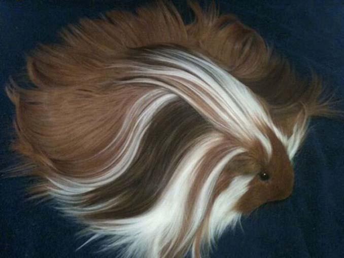 Το πλάσμα με το πιο εντυπωσιακό μαλλί στο ζωικό βασίλειο (13)