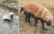 Σκύλοι εναντίον λάσπης (25)