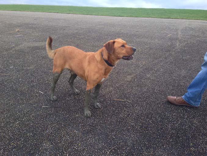 Σκύλοι εναντίον λάσπης (3)
