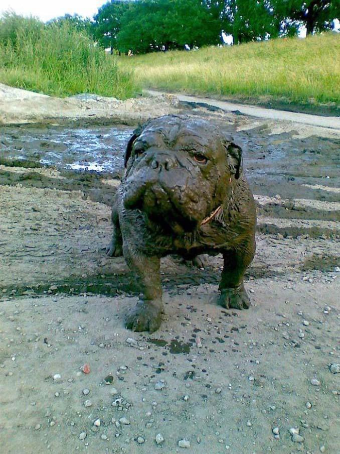 Σκύλοι εναντίον λάσπης (6)