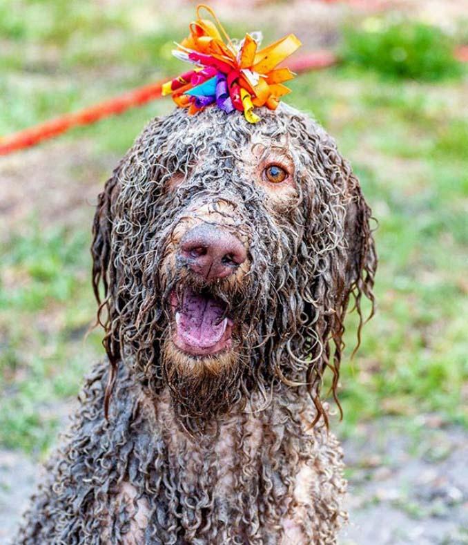 Σκύλοι εναντίον λάσπης (16)