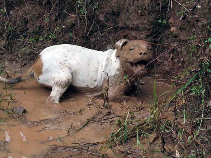 Σκύλοι εναντίον λάσπης (18)