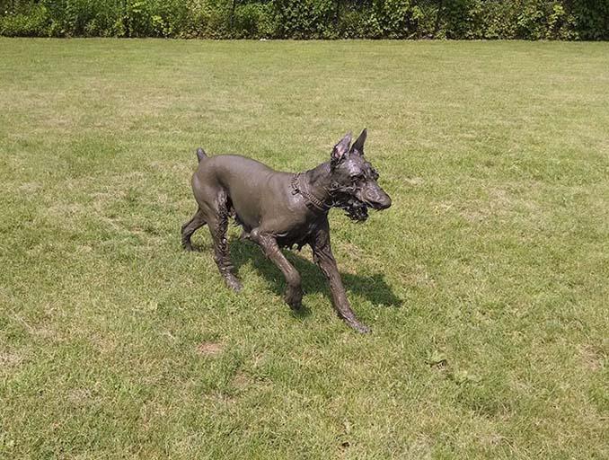 Σκύλοι εναντίον λάσπης (19)