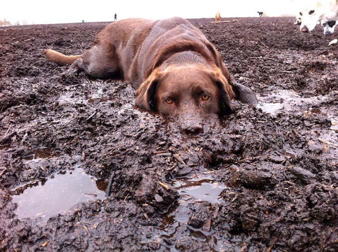 Σκύλοι εναντίον λάσπης (22)