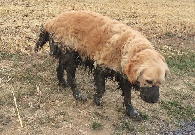 Σκύλοι εναντίον λάσπης (23)