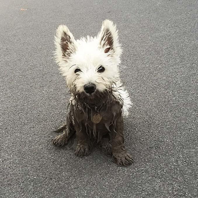 Σκύλοι εναντίον λάσπης (24)