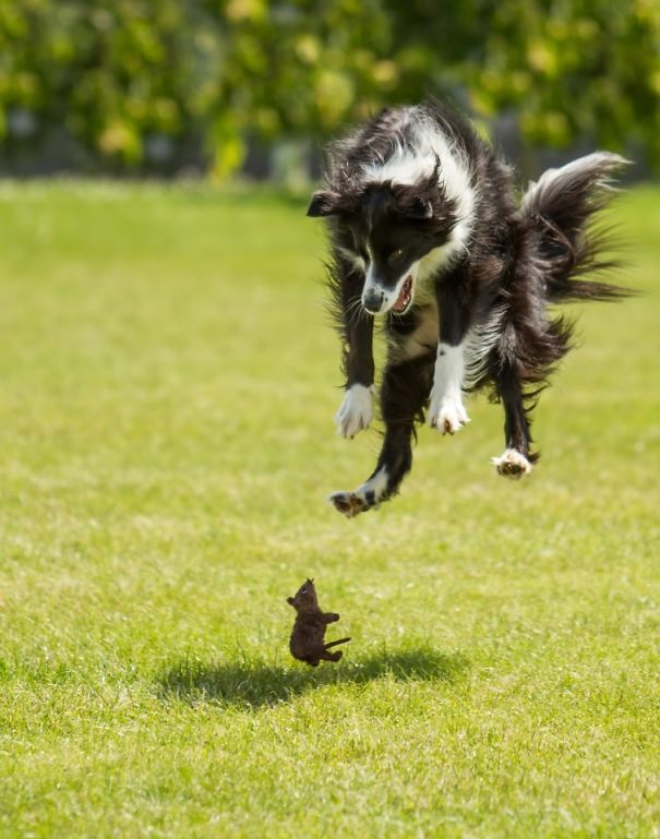 Σκύλοι που φοβούνται τα πιο απίθανα πράγματα (2)