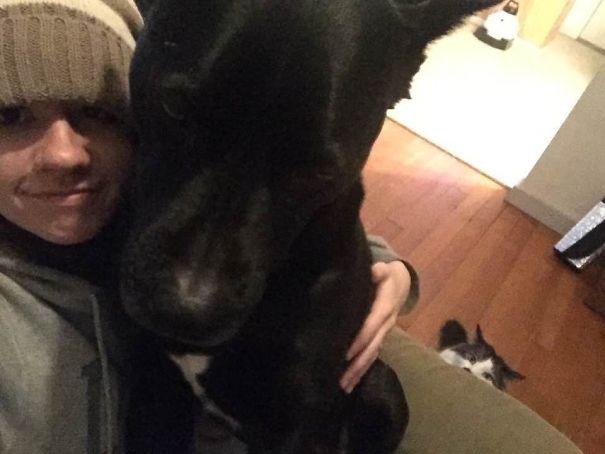 Σκύλοι που φοβούνται τα πιο απίθανα πράγματα (4)