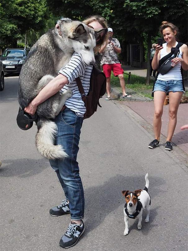 Σκύλοι που φοβούνται τα πιο απίθανα πράγματα (12)