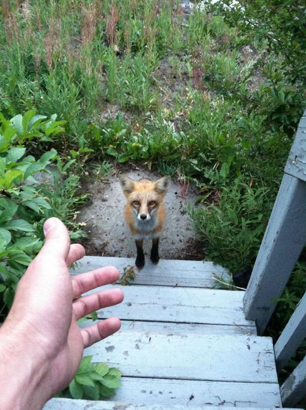 Ζώα που ήρθαν απλώς να πουν ένα γεια (3)