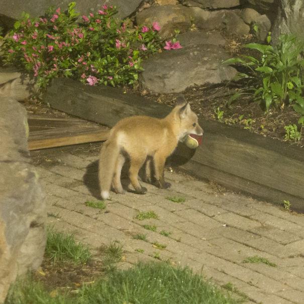 Ζώα που ήρθαν απλώς να πουν ένα γεια (5)