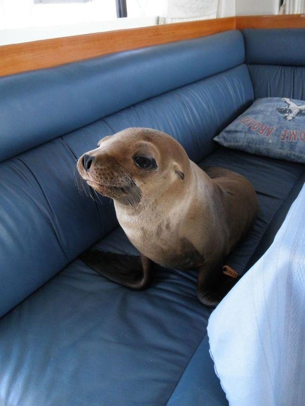 Ζώα που ήρθαν απλώς να πουν ένα γεια (6)
